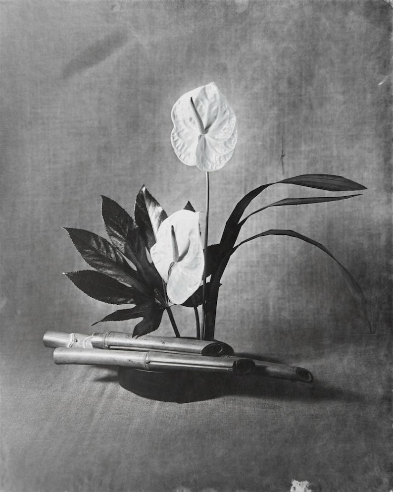 RHS Portfolio Entry Anthurium