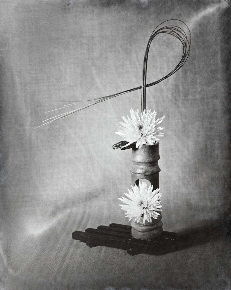 RHS Portfolio Entry Chrysanthemum