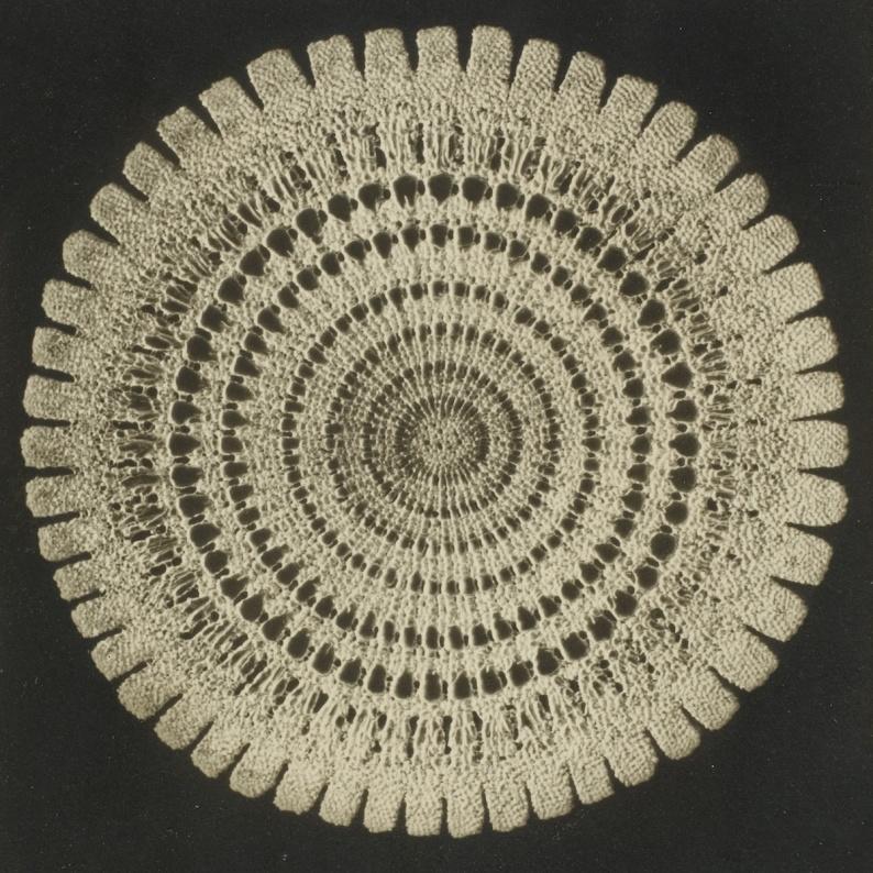 Frederick Evans Micrograph Sea Urchin Echinus PLEASE SEE METADATA FOR TEXCT TO PUBLISH