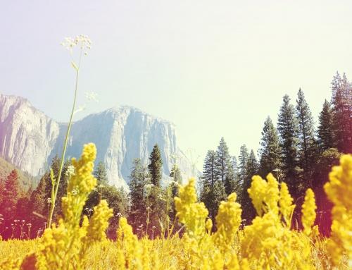 Nick Meek Yosemite Series El Capitan Hi Res