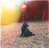 Kai Uwe Gundlach Dog Sunbeam