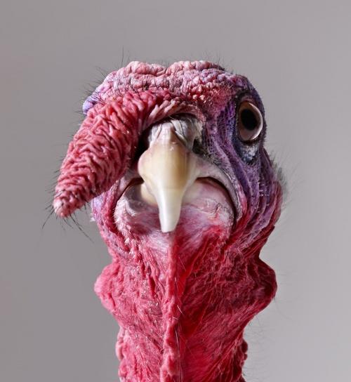 Final Turkey Surprise