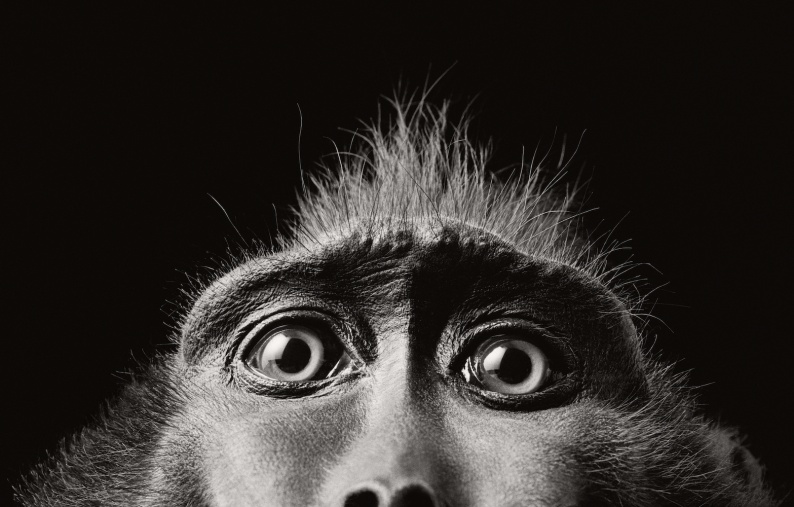Tim Flach Monkey Eyes 2001 copy 2
