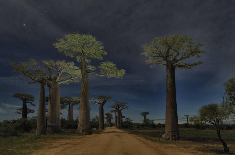 Adrian Houston Richard Branson Grandidier s Baobab Alley Madagascar 9402