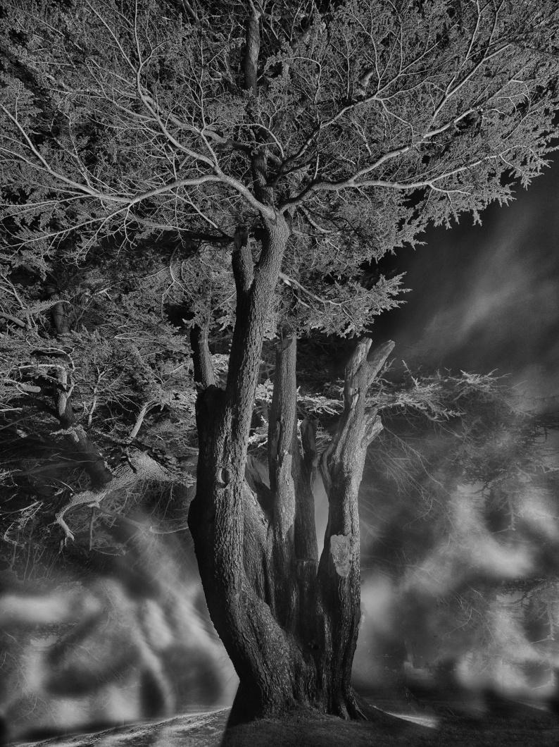 Adrian Houston Stuart Simpson Cedar Fordell Castle 9808