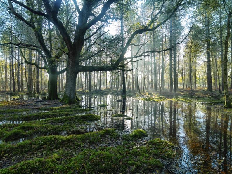 Adrian Houston Jori White New Forest Oaks 9201