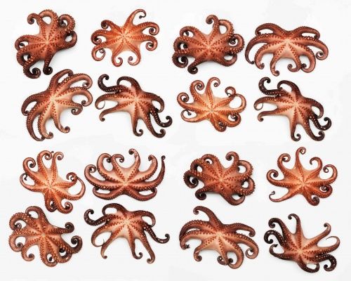Octopus Collage Web