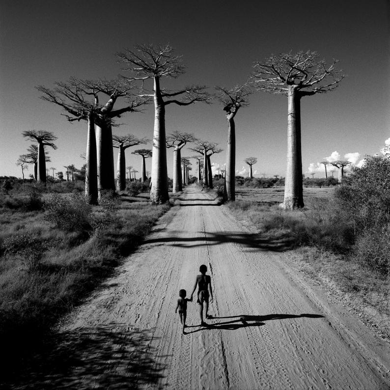 Allee des Baobabs Madagascar MR 1 e1556620929188